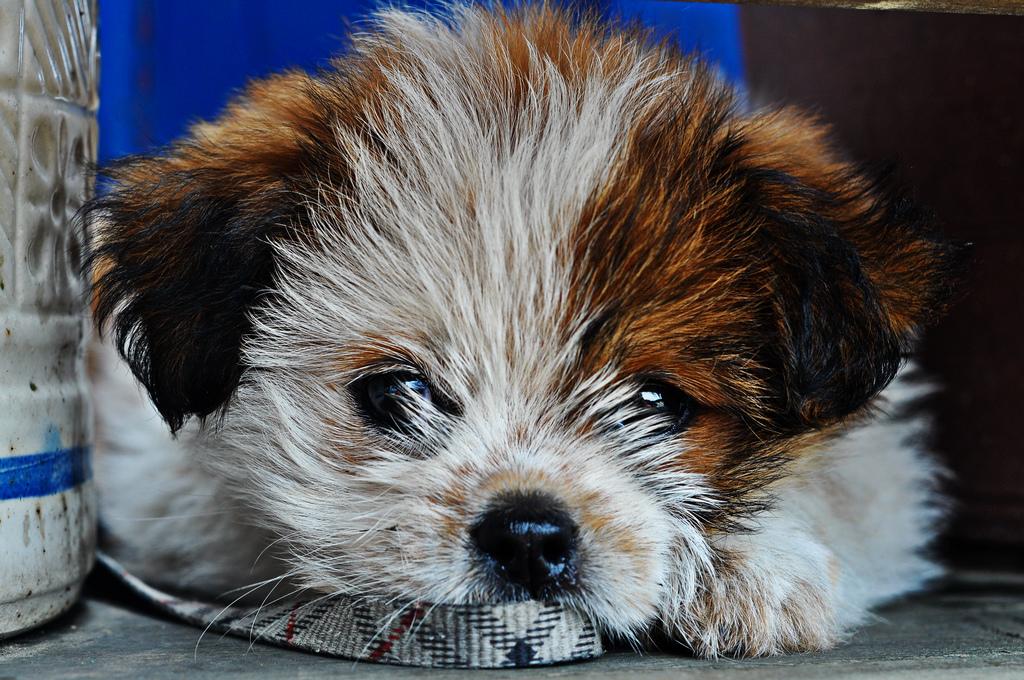 puppy07 Грустные щеночки