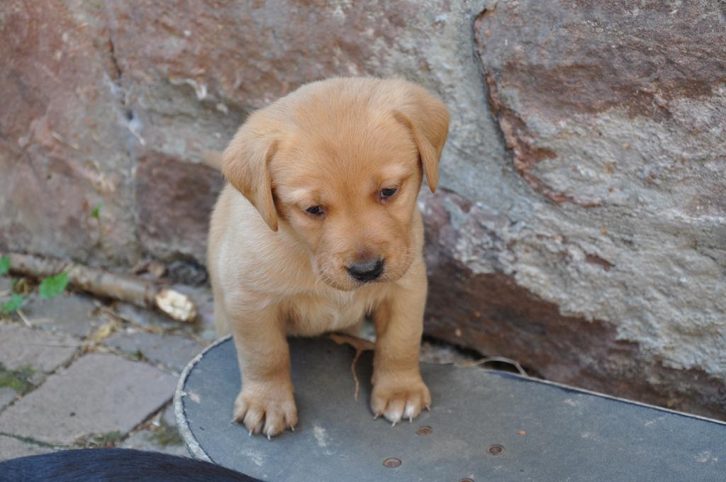 puppy08 Грустные щеночки