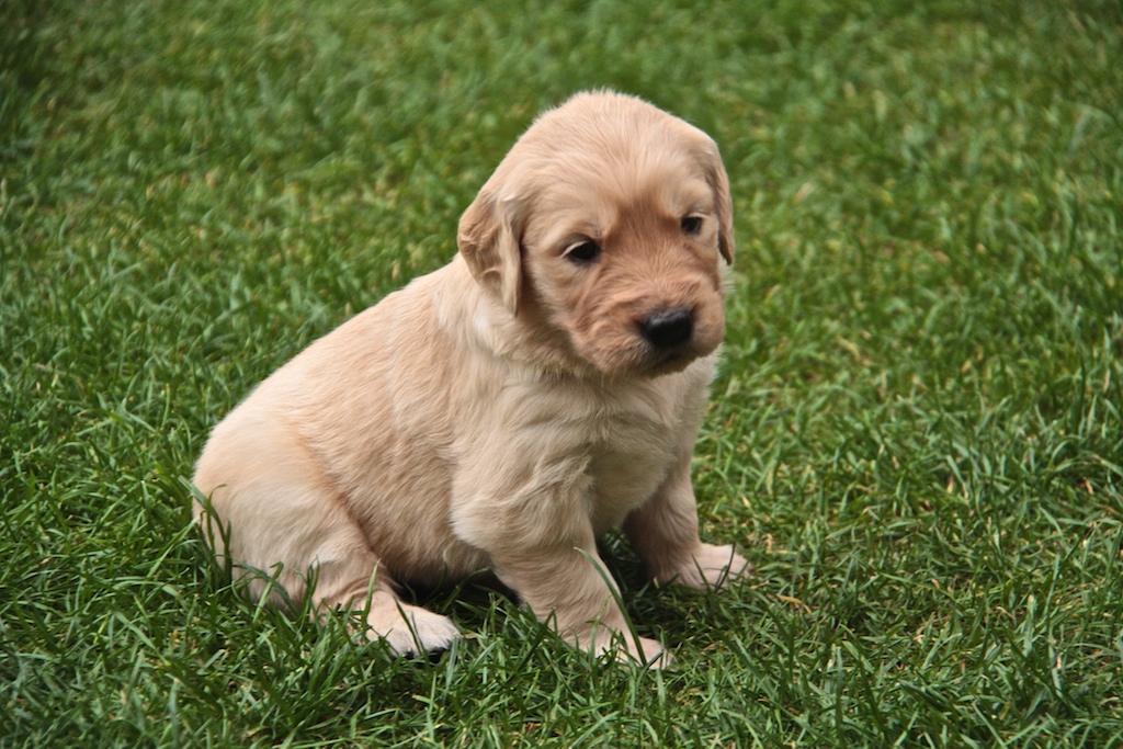 puppy09 Грустные щеночки