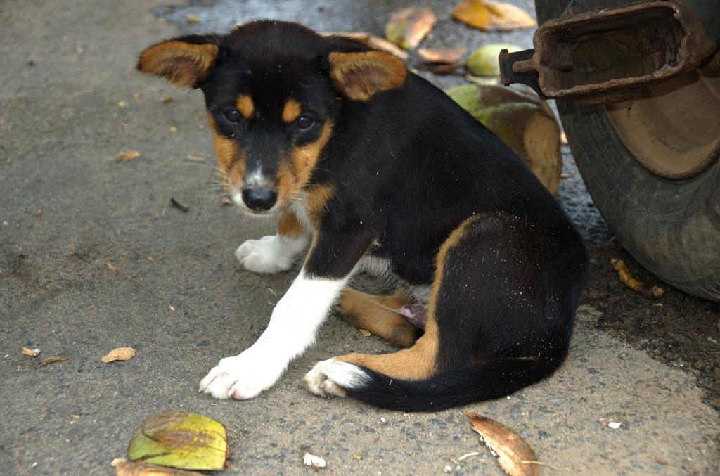 puppy10 Грустные щеночки