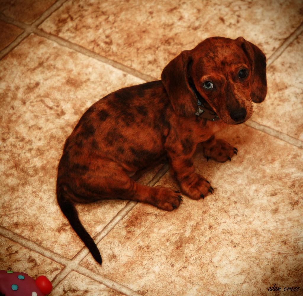 puppy13 Грустные щеночки