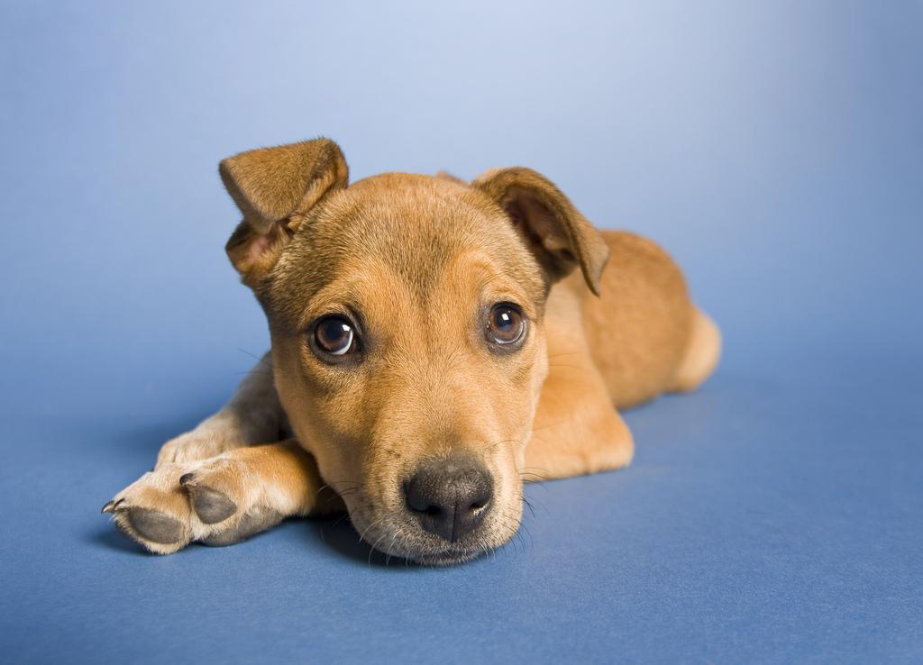 puppy17 Грустные щеночки