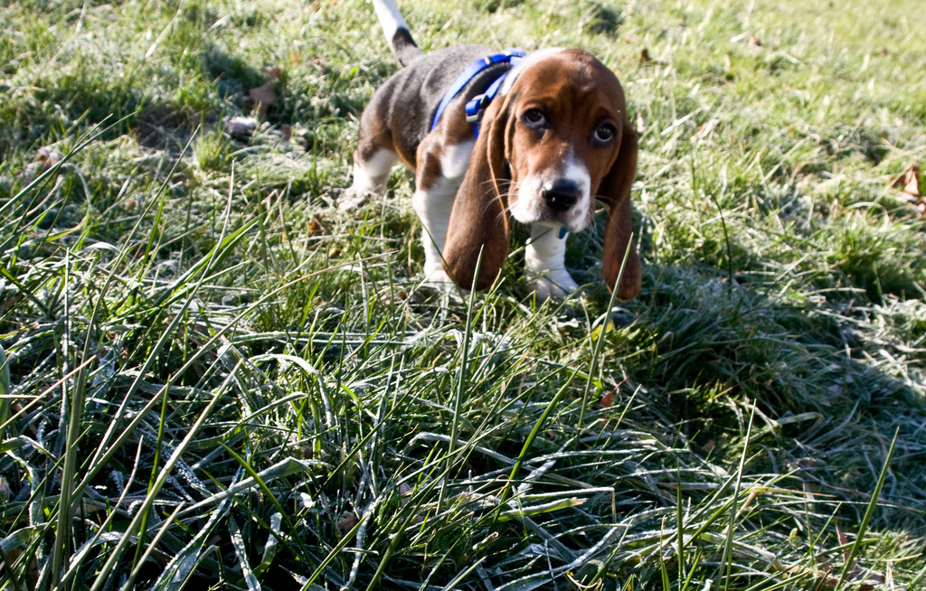 puppy18 Грустные щеночки