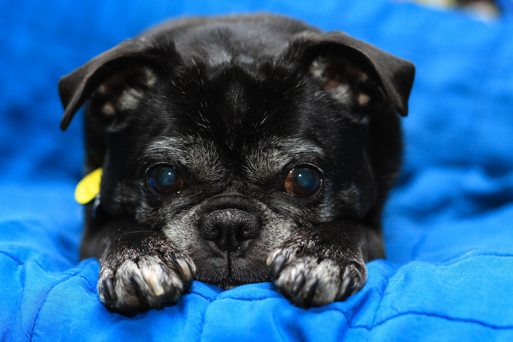 puppy19 Грустные щеночки