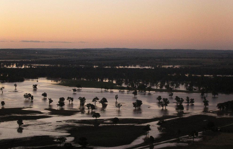 s w02 RTR2YV5K Пауки спасаются от наводнения в Австралии