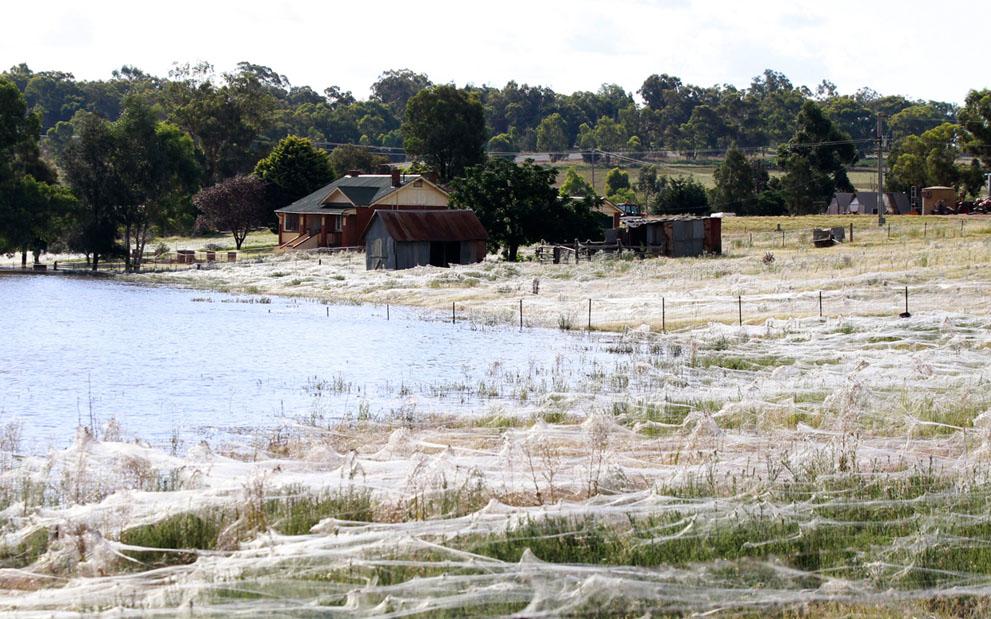s w05 RTR2YWNP Пауки спасаются от наводнения в Австралии