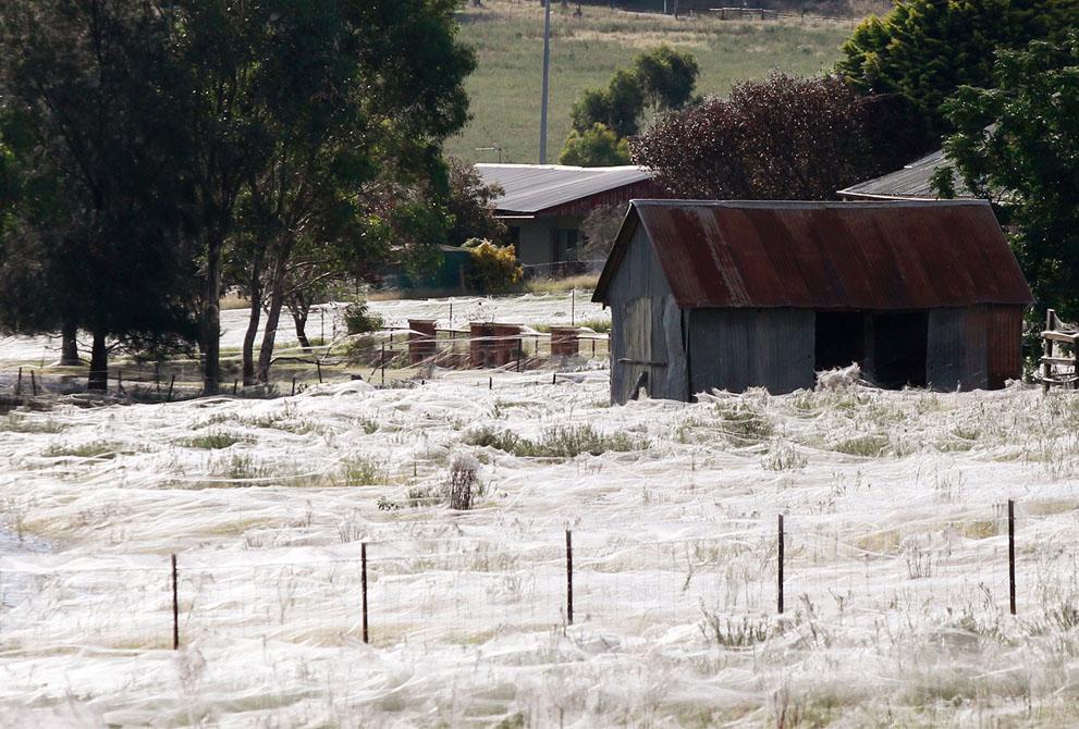 s w15 RTR2YWN3 Пауки спасаются от наводнения в Австралии