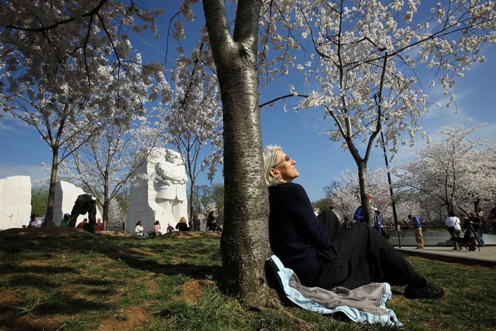 stars20 907x990 Фестиваль цветения сакуры в Вашингтоне 2012