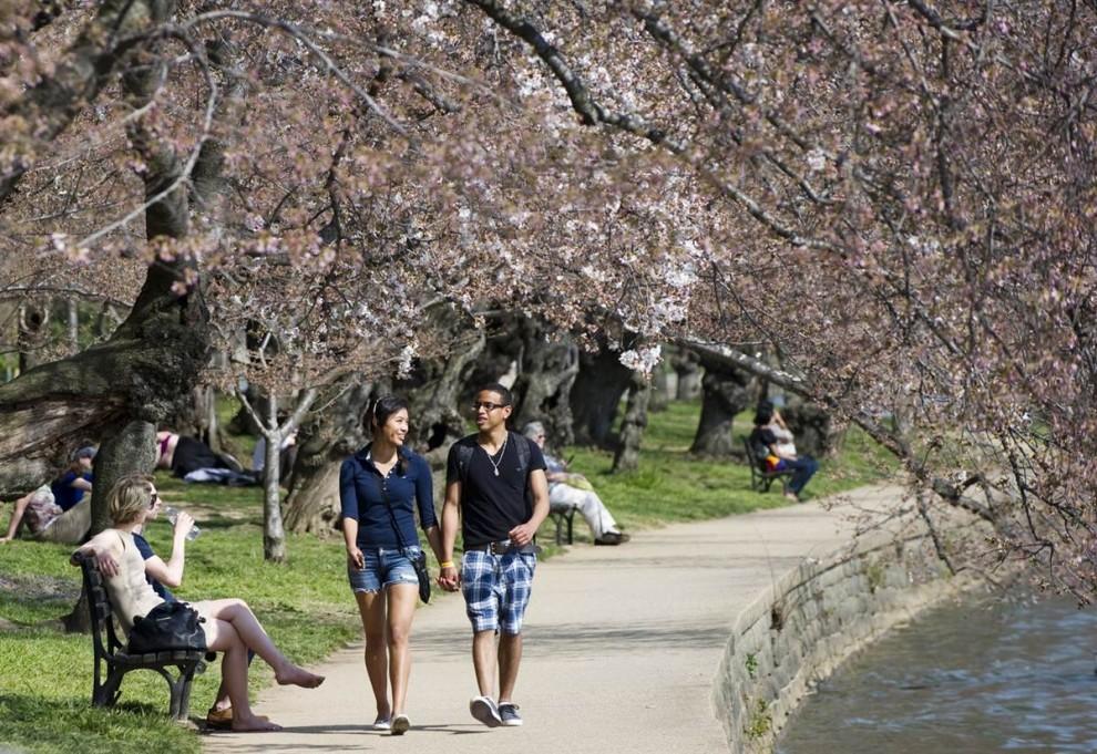stars24 644x990 Фестиваль цветения сакуры вВашингтоне 2012
