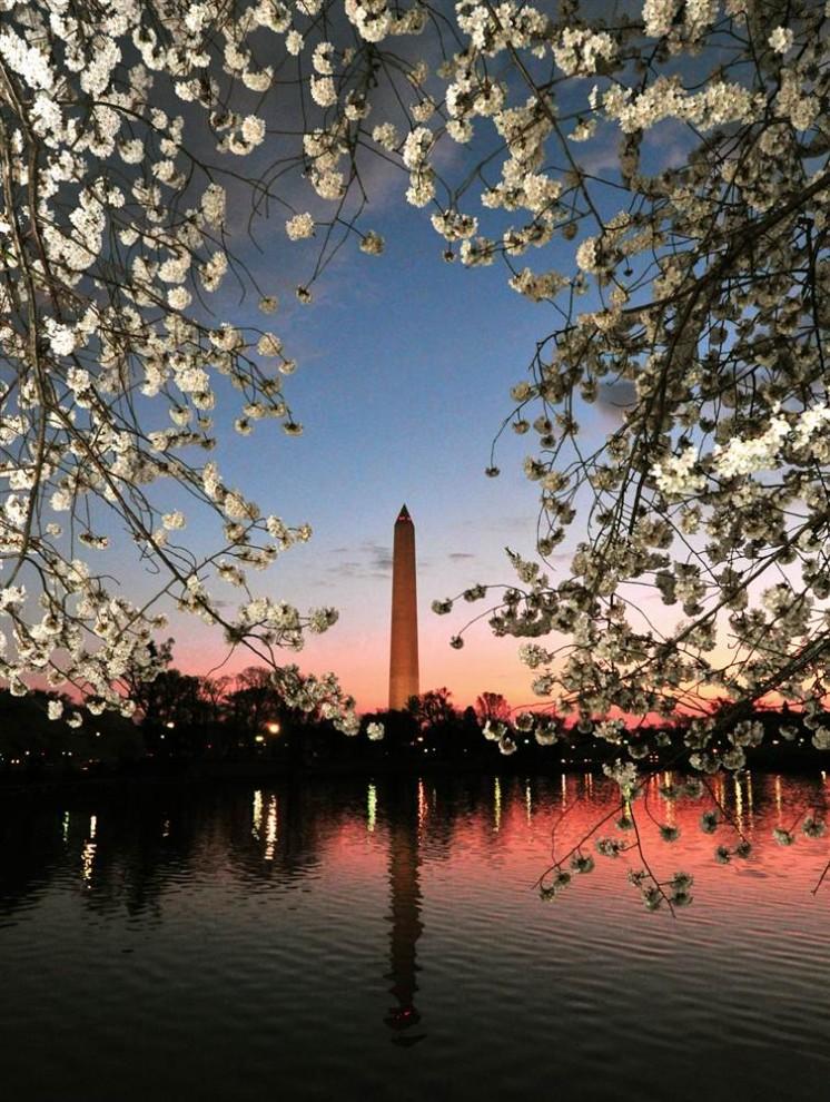 stars24 644x9901 Фестиваль цветения сакуры вВашингтоне 2012