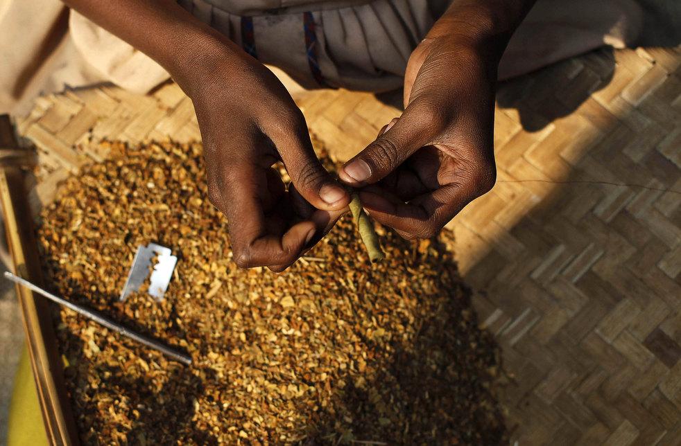 tobacco roller 04 Индийская девочка в табачном плену
