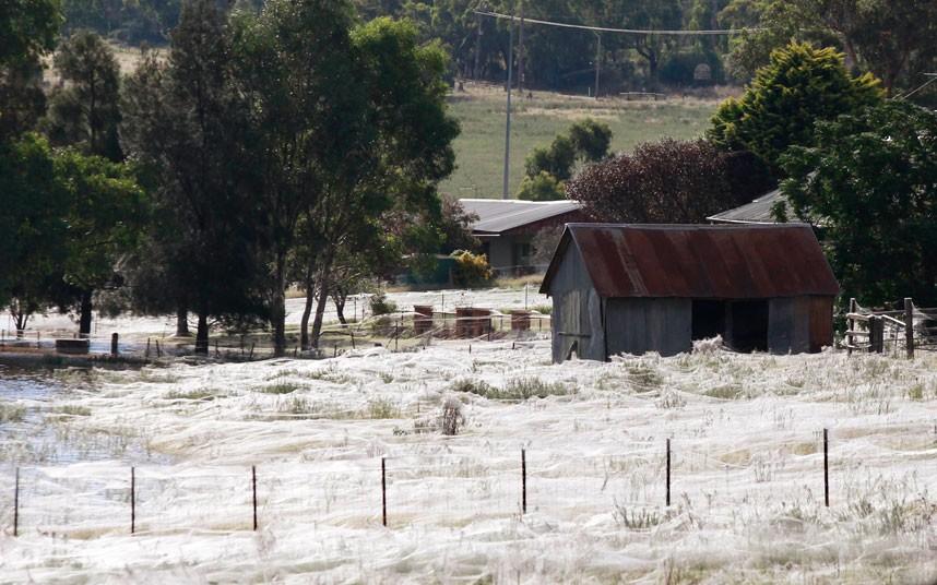 u4lkj Нашествие пауков после наводнения в Австралии