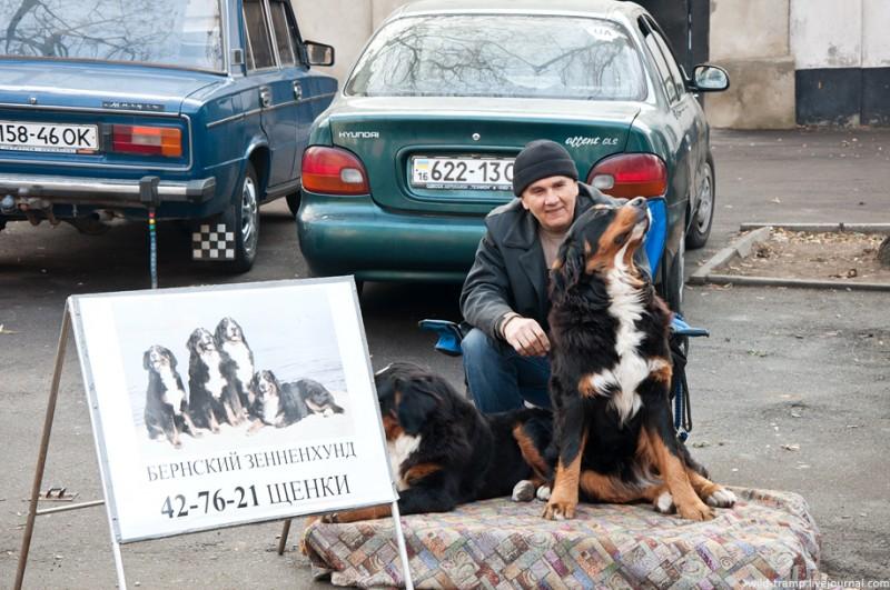 0324 800x531 Одесская барахолка