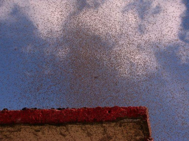 0 8761b  Нашествие комаров на деревню в Беларуси