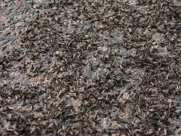 0 8761c  Нашествие комаров на деревню в Беларуси