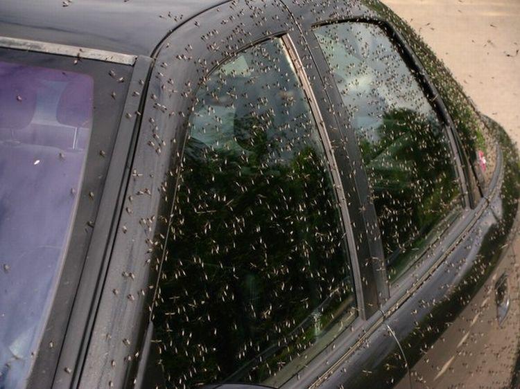 0 8761e  Нашествие комаров на деревню в Беларуси