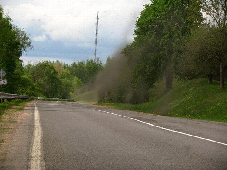 0 87620  Нашествие комаров на деревню в Беларуси