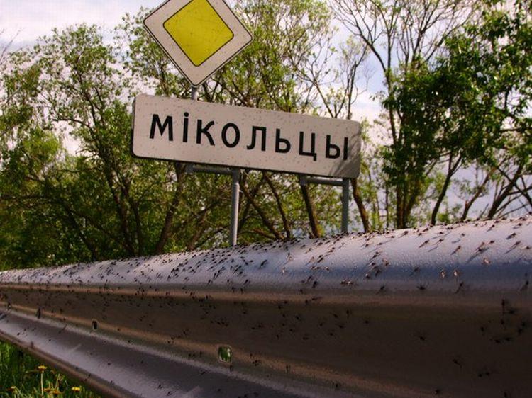 0 87621  Нашествие комаров на деревню в Беларуси