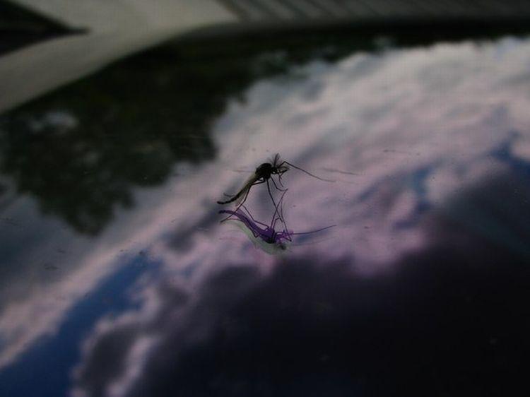 0 87623  Нашествие комаров на деревню в Беларуси