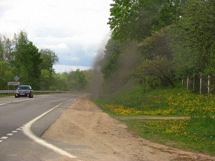 0 87624  Нашествие комаров на деревню в Беларуси