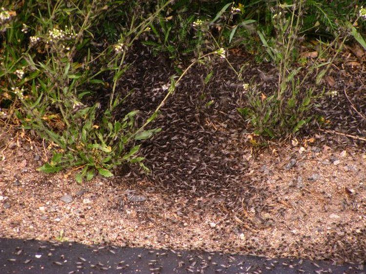 0 87628  Нашествие комаров на деревню в Беларуси