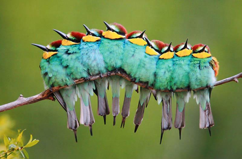 10106 40 самых удачных фотографий животных, сделанных в нужный момент