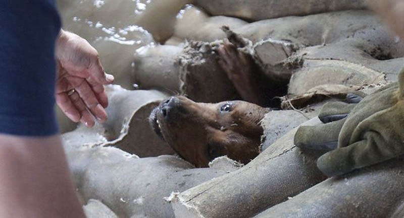 10107 Спасение собаки