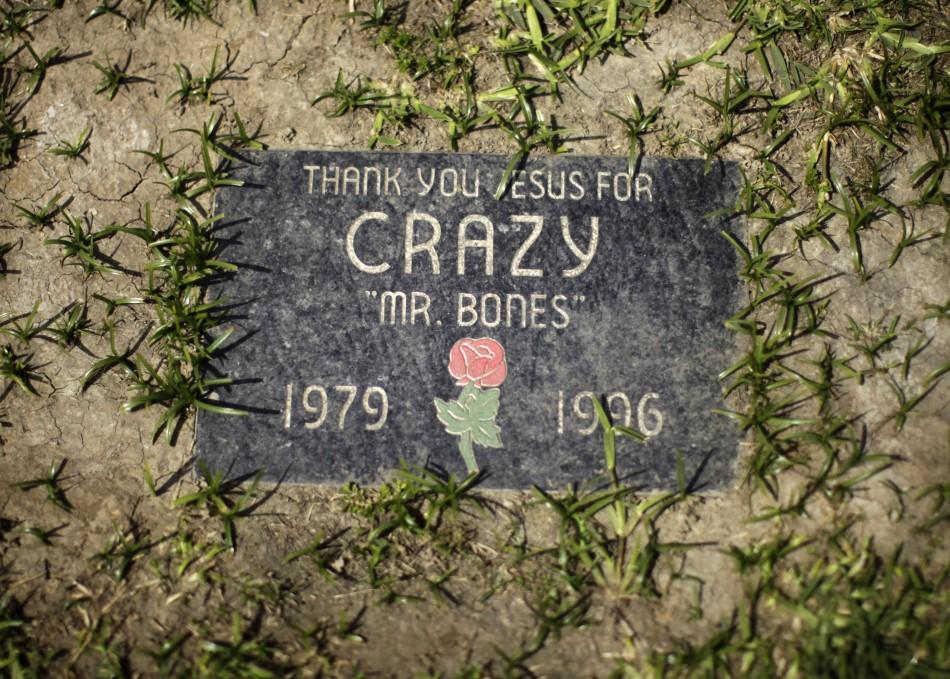 1063 Кладбища домашних животных в США