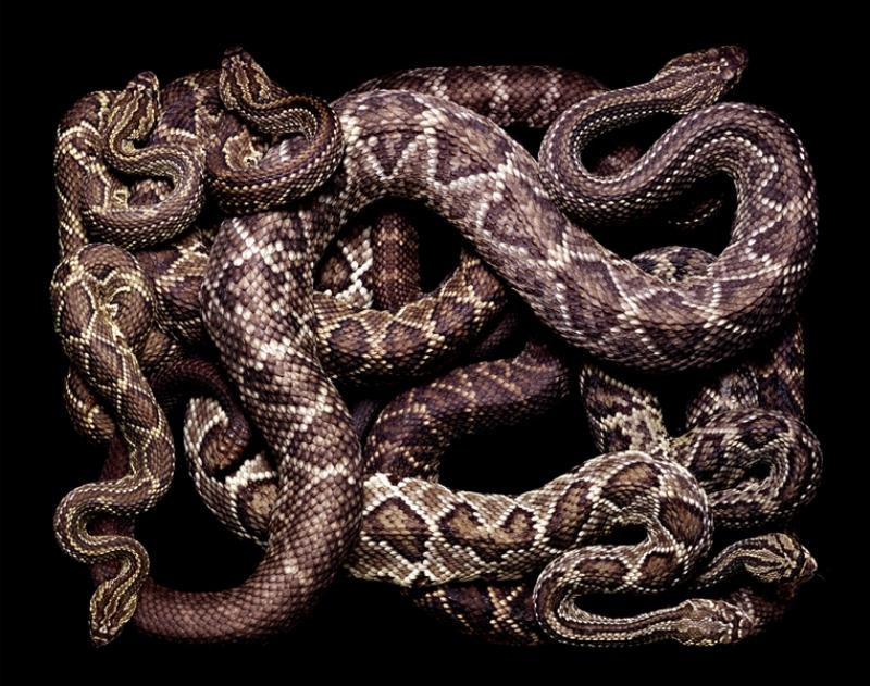 1087 Змеиная коллекция Гвидо Мокафико