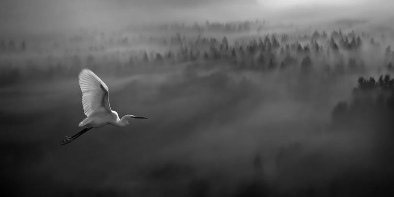 1111 Словения с высоты птичьего полёта