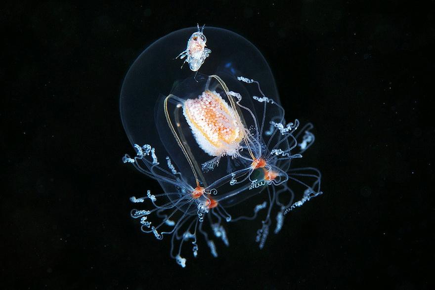 11111 Подводные чудеса Белого моря на фото Александра Семенова