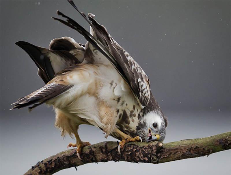 11141 40 самых удачных фотографий животных, сделанных в нужный момент