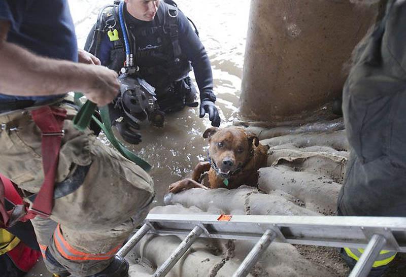 11142 Спасение собаки