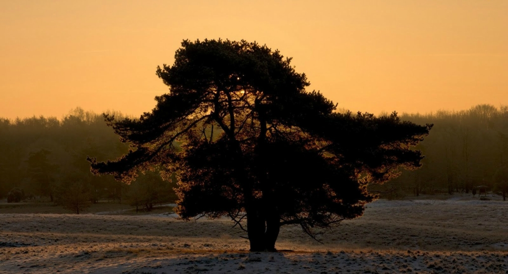 11150 Одинокие деревья на полях