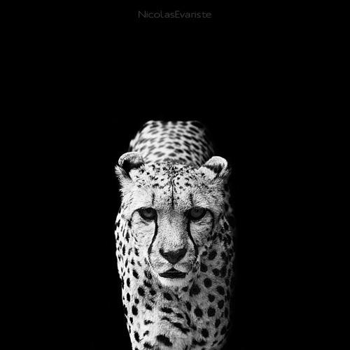 113 Темный зоопарк Ника Эваристе