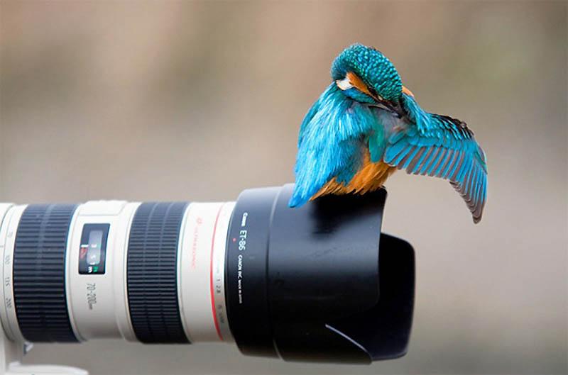 12116 40 самых удачных фотографий животных, сделанных в нужный момент