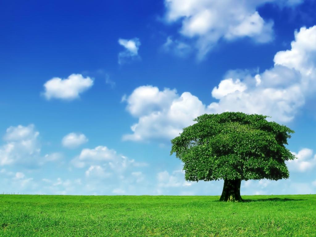 12125 Одинокие деревья на полях