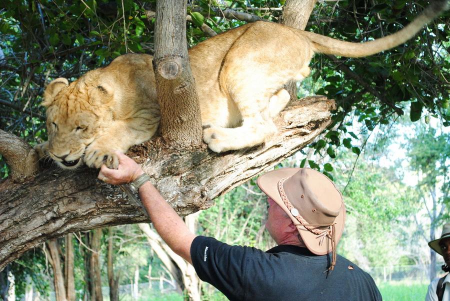 12145 Прогулка со львами
