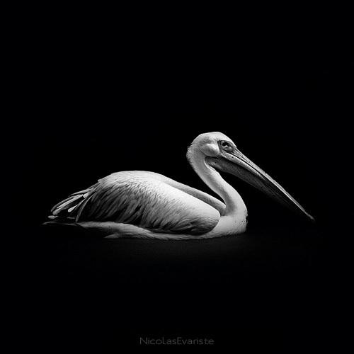 123 Темный зоопарк Ника Эваристе