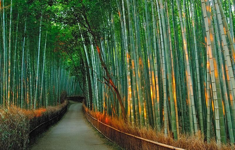 1267 800x511 Бамбуковый коридор у подножья горы в Киото