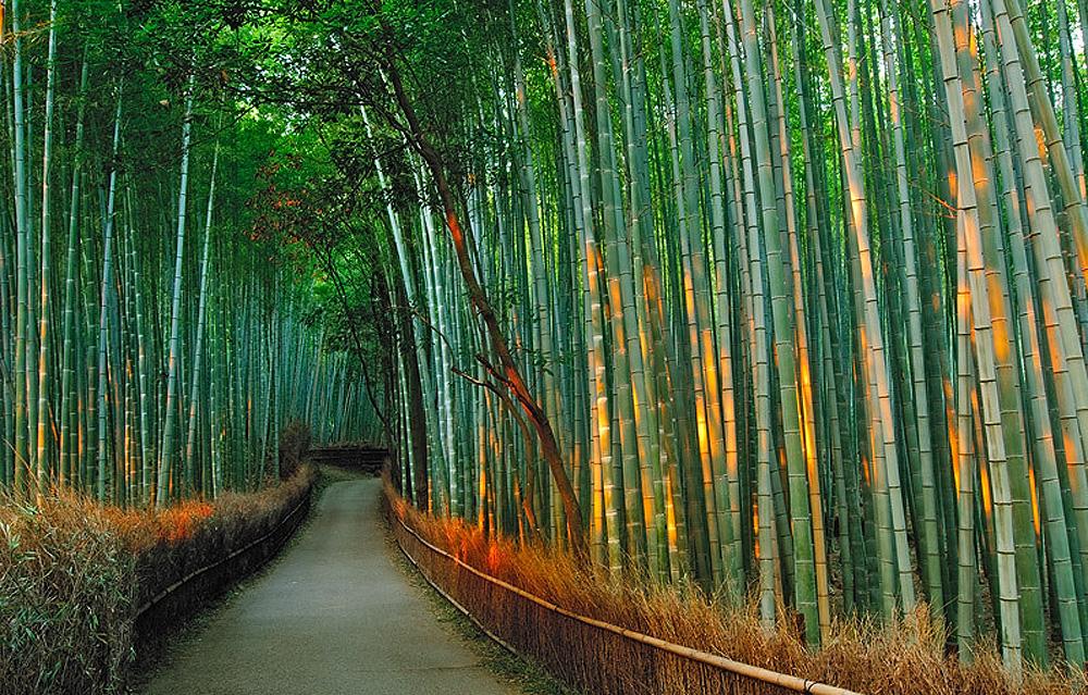 1267 Бамбуковый коридор у подножья горы в Киото