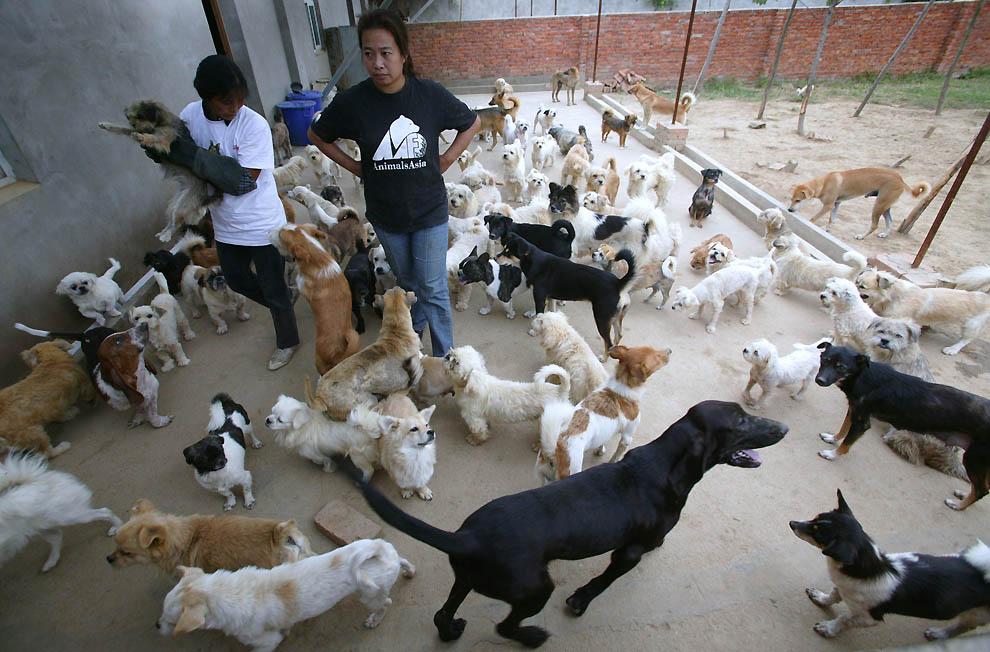 1289 Приют для бродячих животных в Нанкине