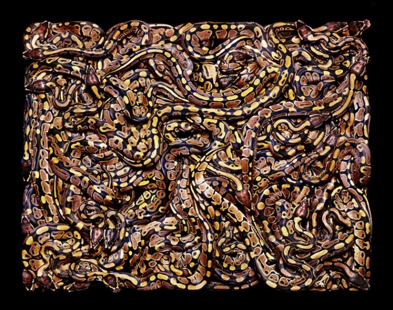 1296 Змеиная коллекция Гвидо Мокафико
