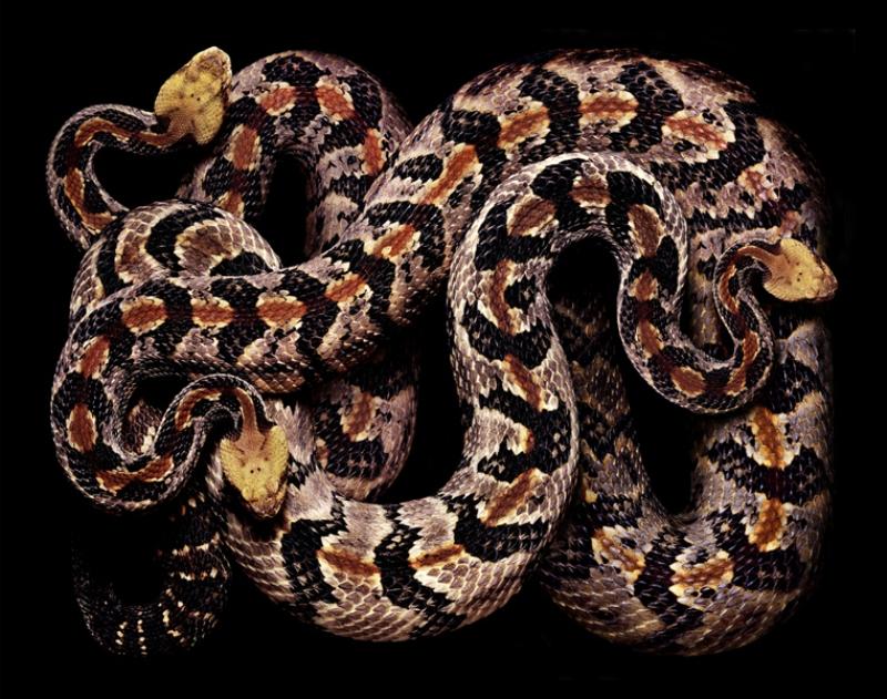 1297 Змеиная коллекция Гвидо Мокафико