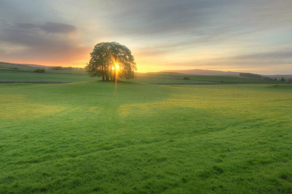 13109 Одинокие деревья на полях