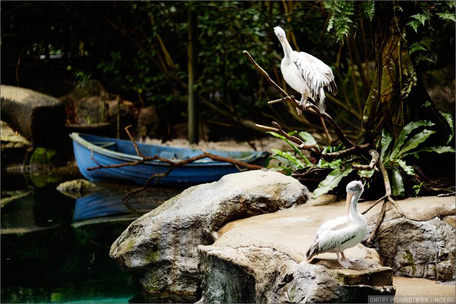 13124 Самый открытый зоопарк мира
