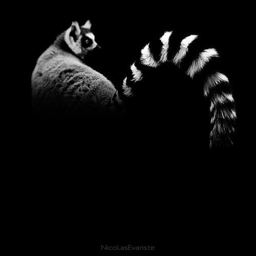 133 Темный зоопарк Ника Эваристе