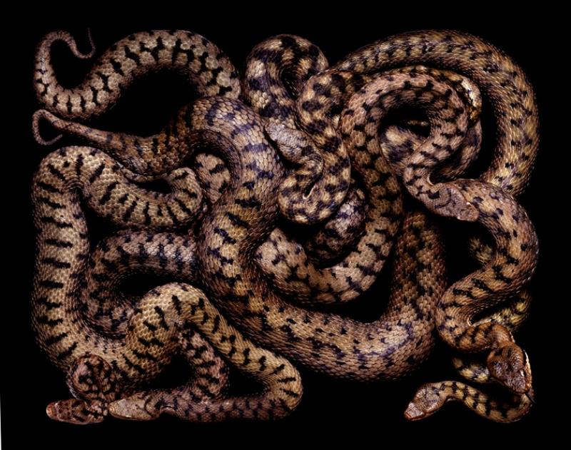 1377 Змеиная коллекция Гвидо Мокафико