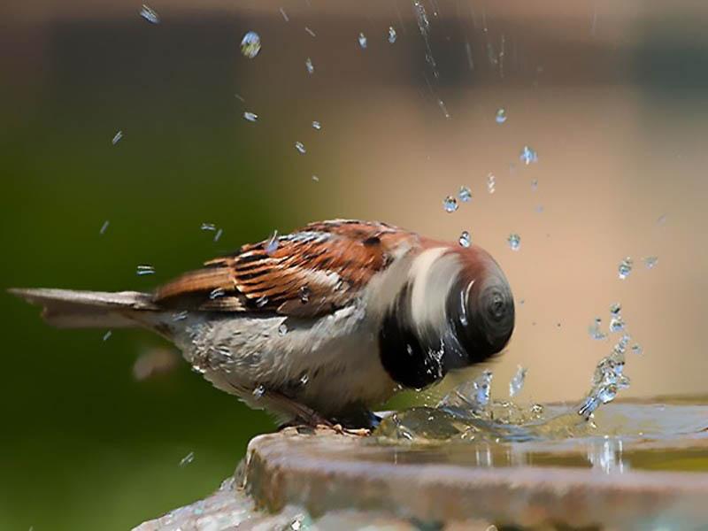 1400 40 самых удачных фотографий животных, сделанных в нужный момент
