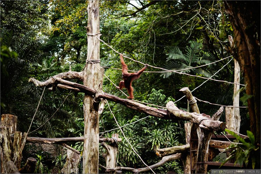 14114 Самый открытый зоопарк мира